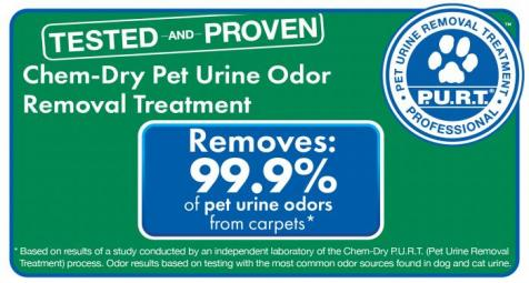 removing carpet pet stains