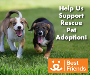 Cleaning For The Paws – Supporting Rescue Pet Adoption in Rochester